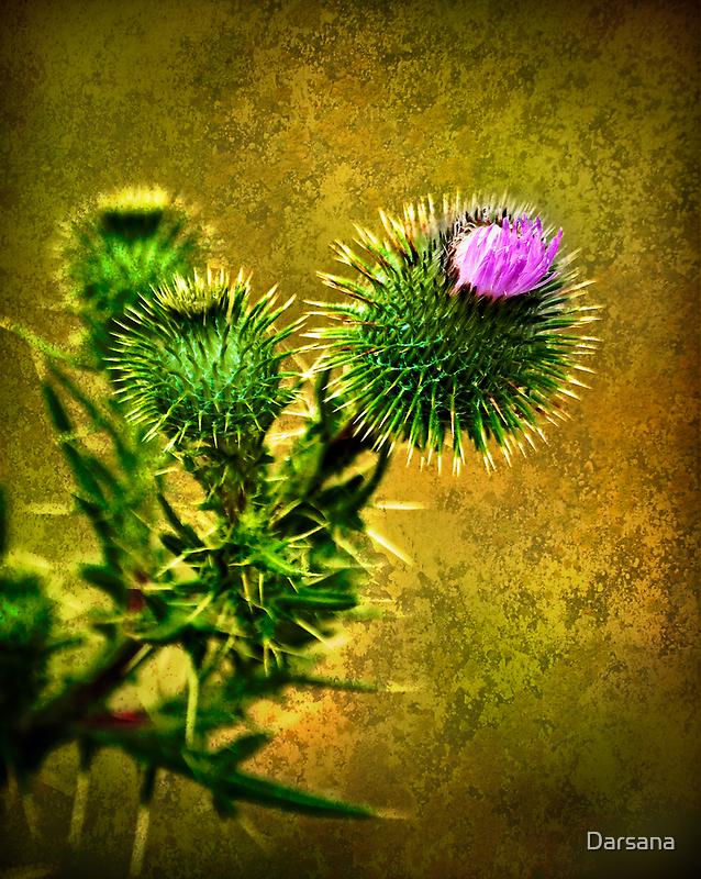 Flowering Thistle by Tony Steinberg