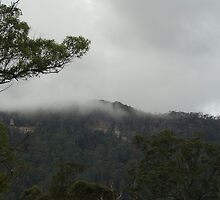 Upper Lansdowne NSW by Carol Field