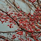 berries  by cetrone