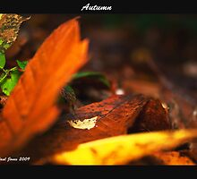 Autumn Leaves by Paul Jones