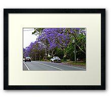 Jacaranda In Bloom Framed Print