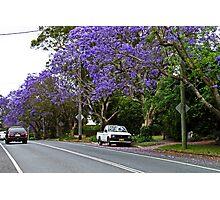 Jacaranda In Bloom Photographic Print