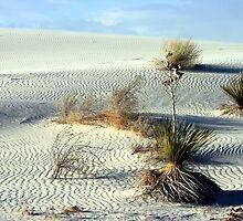 White Sands Desert Scene by Terence Russell