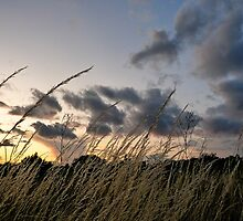 Sunset Grass by Nautipuss