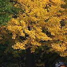 golden tree by yvesrossetti