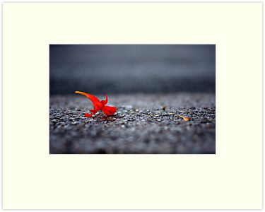 red flower by laura-moreno