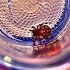 Spider by Raven Adams