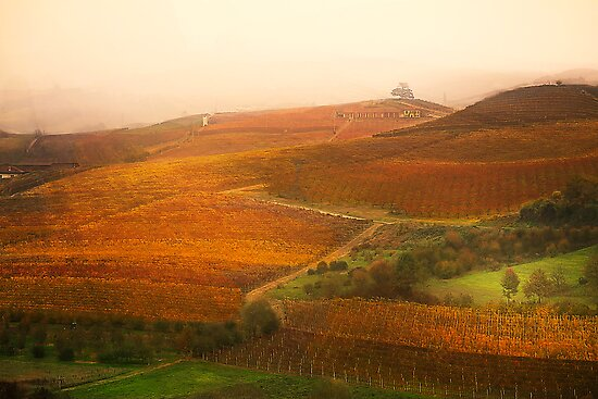Vineyards landscape by becks78