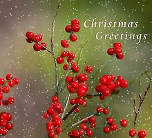 Christmas Berries by Elaine  Manley