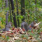 Pair of Gray Squirrels by Molly  Kinsey
