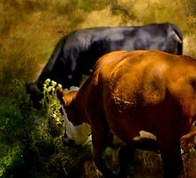 Cows in Pasture by sunmallia