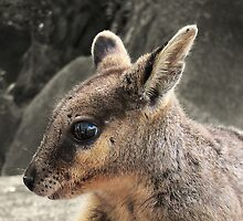 Australian Rock Wallaby - For Calender 2010 by Steven  Sandner