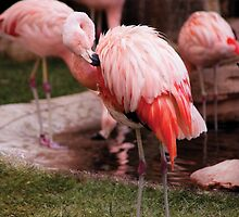 The Flamingo by Mike  Savad