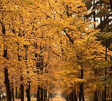 Autumn park alley. by demigod