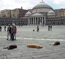 Doggy Siesta in Naples. by David Dutton
