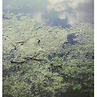 pond  reflection by sephoto