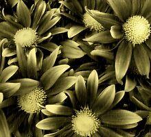 A Golden Glow On A Dreary Day by Carla Jensen