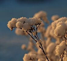 Frosty Morning (I) by Stan Wojtaszek