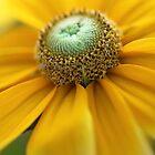 Golden Glory by Melissa Gurdus