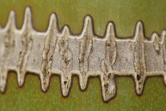 green zip by yvesrossetti