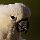 Australian Birds by PurelyPrime