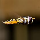 Hover - A hoverfly midflight by PurelyPrime
