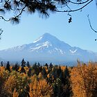 Mt. Hood Fall Splendor by worldtripper