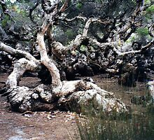 Gnarled Swamp Trees by Lozzie5243