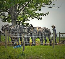 Amish Farmer by Dyle Warren