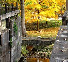 Autumn Lock by Veronica Schultz