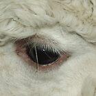 LLama Eye by Nobleone