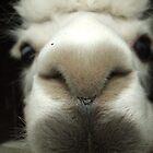 Llama Nose by Nobleone