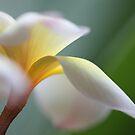 windy flower by yvesrossetti