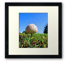 Wild Mushroom Framed Print
