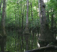 Tupelo Swamp by JGetsinger