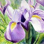 Sundrenched Iris by Ruth S Harris