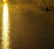 On Golden Pond, You Must Row Towards The Light by David McMahon