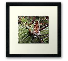 Iced Pinecones Framed Print