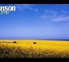 oil seed rape fields in spring by kevin wilkinson