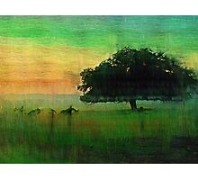 That Tree.  Photographic Print