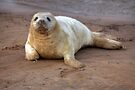 The Donna Nook Grey Seal Colony 2 by Paul Thompson Photography