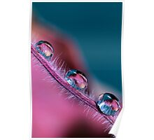 Pink & Blue Poster