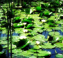 Lillypads by Dee143