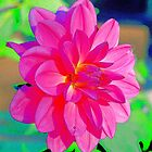 Pink Flower by Tymlaird