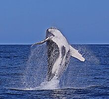 Humpback Breach :: Eden by Clinton Hadenham
