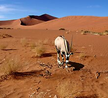 NAMIB DUNES WITH ORYX by Michael Sheridan