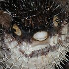 Unhappy Puffer Fish by angora998
