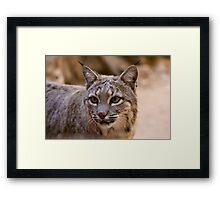 Portrait of a Bobcat Framed Print