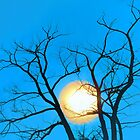 Blue Sunset by bkphoto
