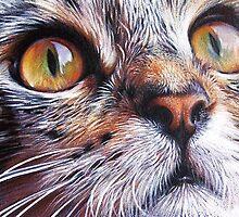 Tabby look #2 by Elena Kolotusha